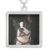 Smiling Boston terrier with collar Silver Plated Necklace