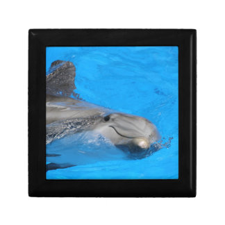 Smiling Bottlenose Dolphin Gift Boxes