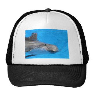Smiling Bottlenose Dolphin Trucker Hats