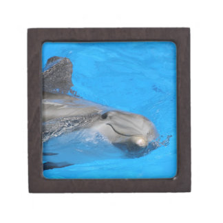 Smiling Bottlenose Dolphin Premium Jewelry Boxes