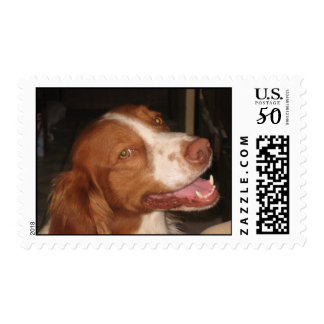 Smiling Brittany Spaniel Postage