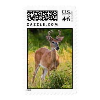 Smiling Buck stamp