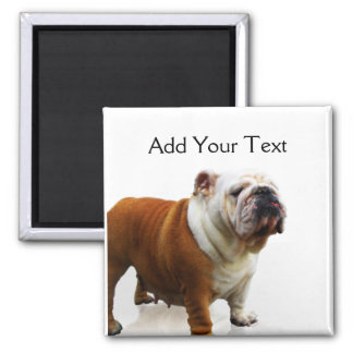 Smiling Bulldog 2 Inch Square Magnet