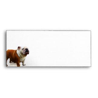 Smiling Bulldog Envelopes