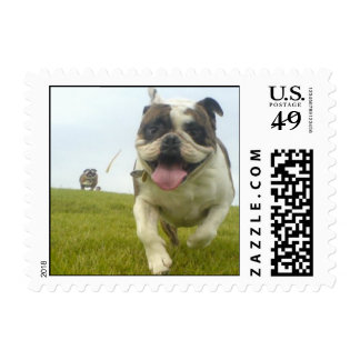 Smiling Bulldogs at the park Postage Stamp