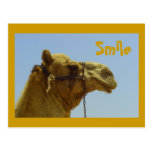 Smiling camel in profile post cards