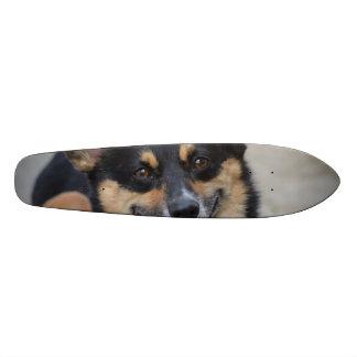 Smiling Corgi Skate Decks