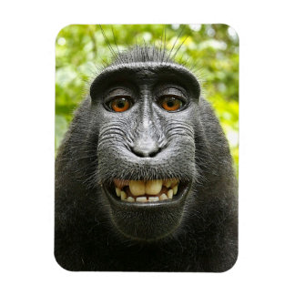 Smiling Crested Celebes Macaque Monkey Magnet