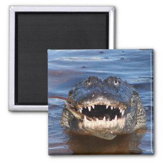Smiling Crocodile 2 Inch Square Magnet