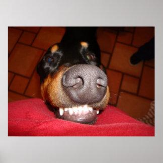SMILING DOBERMAN POSTER