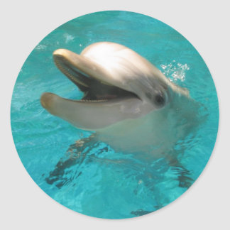 Smiling Dolphin Classic Round Sticker
