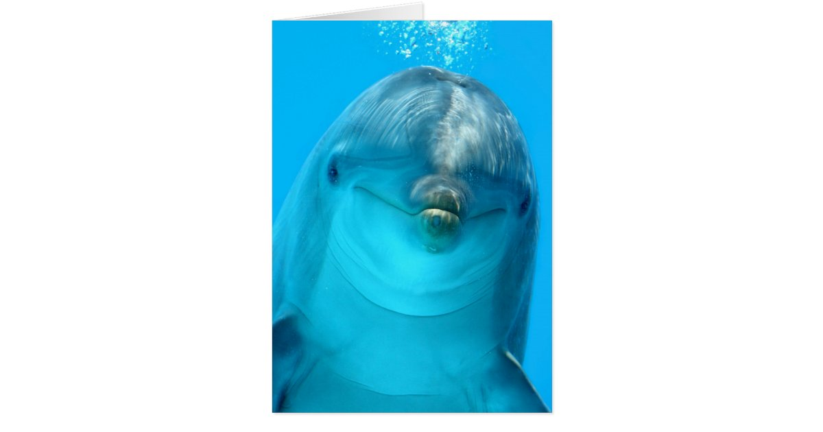 Dolphin Gifts on Zazzle