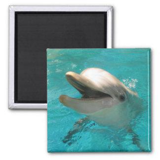 Smiling Dolphin Fridge Magnet