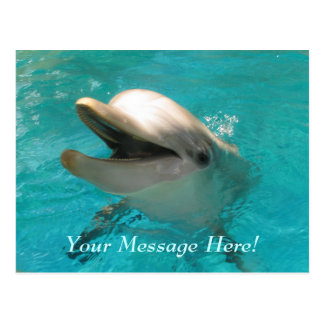 Smiling Dolphin Postcard