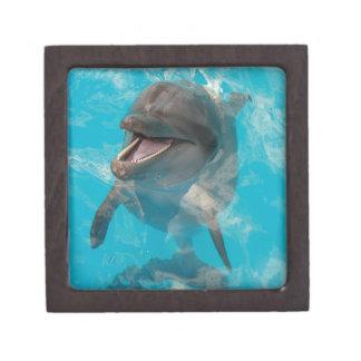 Smiling Dolphin Premium Gift Box