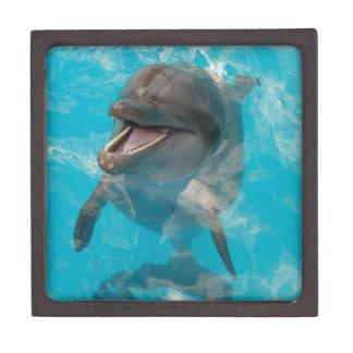 Smiling Dolphin Premium Gift Boxes