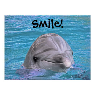Smiling Dolphin - Smile! Poster