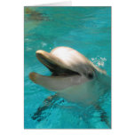 Smiling Dolphin Stationery Note Card