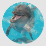 Smiling Dolphin Sticker