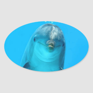 Smiling Dolphin Oval Sticker