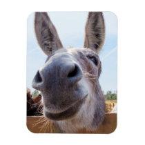 Smiling Donkey Magnet