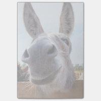 Smiling Donkey Notes