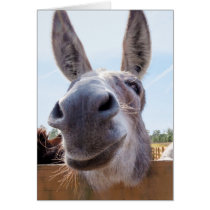 Smiling Donkey with Silly Grin Card