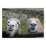 Smiling Donkeys! Greeting Card