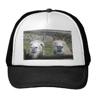 Smiling Donkeys Mesh Hats