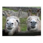 Smiling Donkeys! Postcard