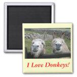Smiling Donkeys! Refrigerator Magnet