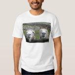 Smiling Donkeys! Shirt