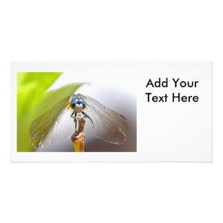 Smiling Dragonfly Macro Photo Photo Greeting Card