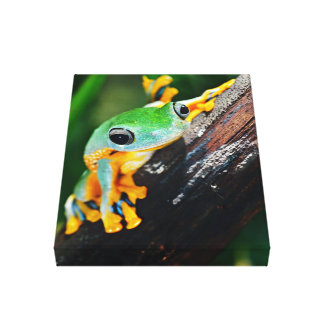 Smiling Flying Frog On Bark Canvas Print