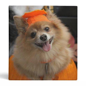 Halloween Themed Smiling Foxy Pomeranian Puppy in Pumpkin Halloween 3 Ring Binder