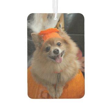 Halloween Themed Smiling Foxy Pomeranian Puppy in Pumpkin Halloween Air Freshener