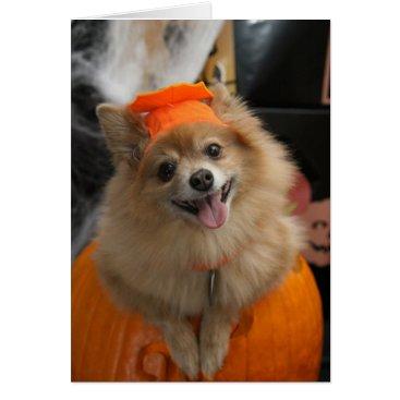 Halloween Themed Smiling Foxy Pomeranian Puppy in Pumpkin Halloween Card