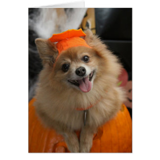 Smiling Foxy Pomeranian Puppy in Pumpkin Halloween Card