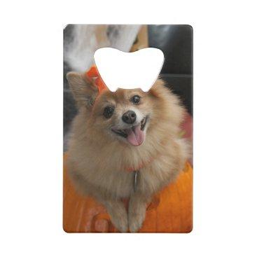 Halloween Themed Smiling Foxy Pomeranian Puppy in Pumpkin Halloween Credit Card Bottle Opener