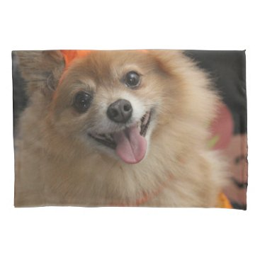Halloween Themed Smiling Foxy Pomeranian Puppy in Pumpkin Halloween Pillowcase