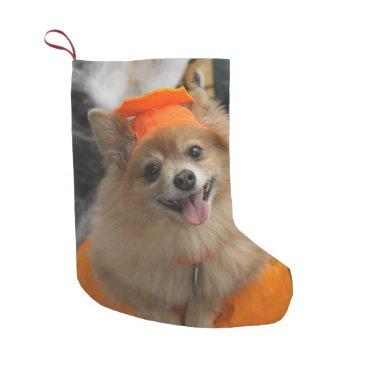 Halloween Themed Smiling Foxy Pomeranian Puppy in Pumpkin Halloween Small Christmas Stocking