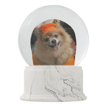 Halloween Themed Smiling Foxy Pomeranian Puppy in Pumpkin Halloween Snow Globe