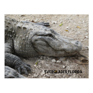 Smiling Gator Postcard