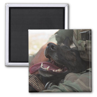 Smiling German Shepherd Military Dog 2 Inch Square Magnet