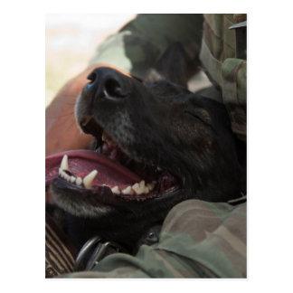 Smiling German Shepherd Military Dog Postcard