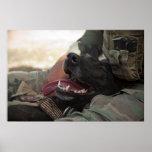 Smiling German Shepherd Military Dog Poster