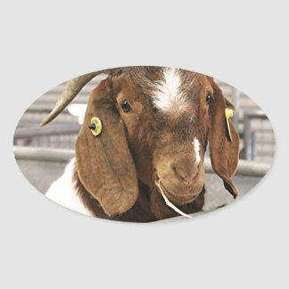 Smiling goat 2 oval sticker