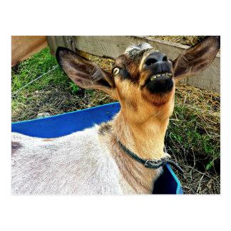 Smiling Goat - Postcard