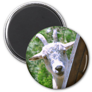 Smiling Goat round magnet