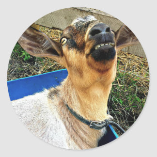 Smiling Goat - Sheet of Stickers